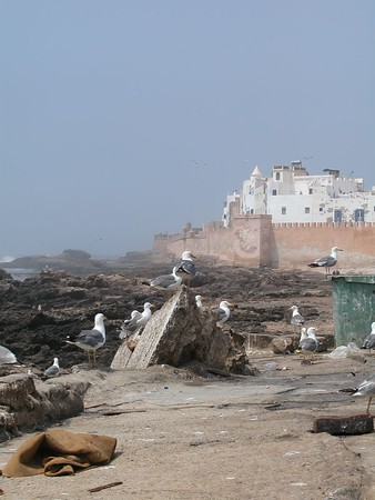 Ramparts and seagulls of Essaouira